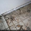 P1100033拆除潮濕發黑舊木地板.JPG