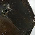簡約無縫木地板-歐洲白橡-120303920施工前海島木地板-樹林 超耐磨木地板/強化木地板