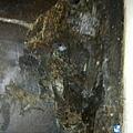 簡約無縫木地板-歐洲白橡-120303921施工前海島木地板-樹林 超耐磨木地板/強化木地板