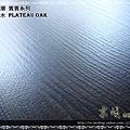 無縫抗潮 賓賓系列-高原橡木02-超耐磨木地板.強化木地板.JPG