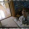 鋼琴面拍立扣-日本櫸木-12050801-超耐磨木地板 強化木地板.jpg