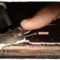 12110701-土城延和路-受潮塑膠地磚.JPG