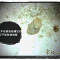 第一代拍立扣 洗白橡木-121019 臥03-土城廣明街 超耐磨木地板.強化木地板.jpg