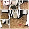 無縫抗潮  賓賓系列-巧克力木-12121106-鶯歌 超耐磨木地板 強化木地板.JPG