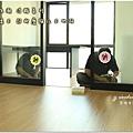 無縫抗潮浮雕系列-直紋橡木-三峽北大-超耐磨木地板-書房1-4.jpg