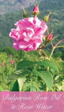 rose-banner.jpg