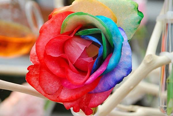 彩虹玫瑰1.JPG