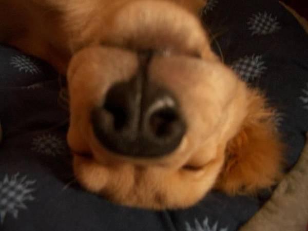 奇怪的狗...