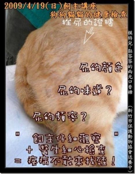 貓狗健康檢查