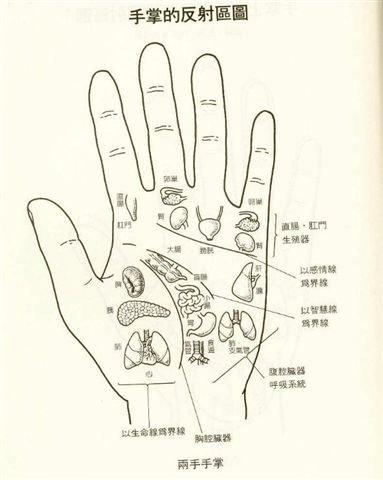 手掌反射區圖.jpg