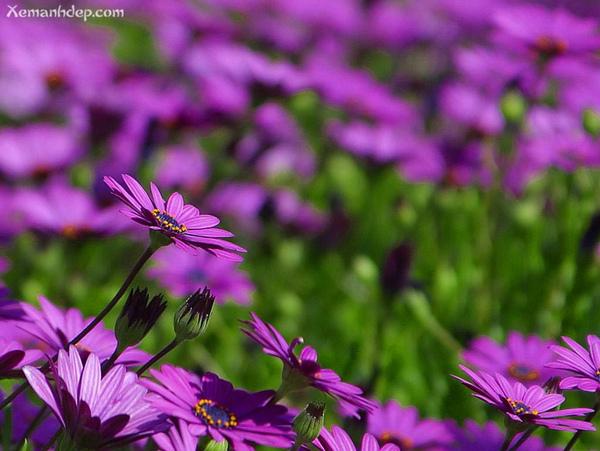 beautiful_flower50.jpg