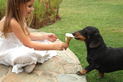 Dog-eating-ice-cream