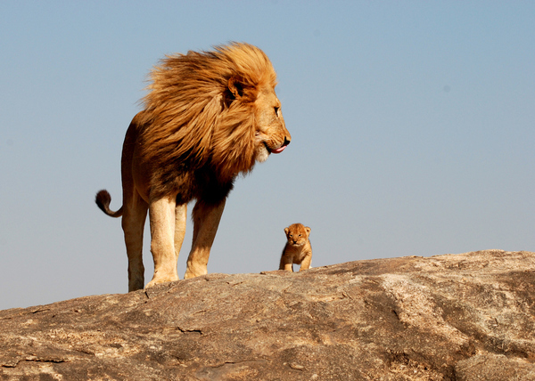 Lion King Mufasa And Simba.jpg