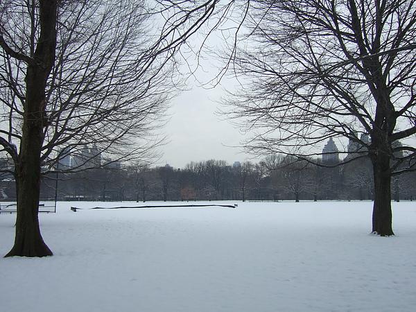 central park under snow