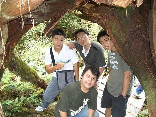 樹洞下.jpg