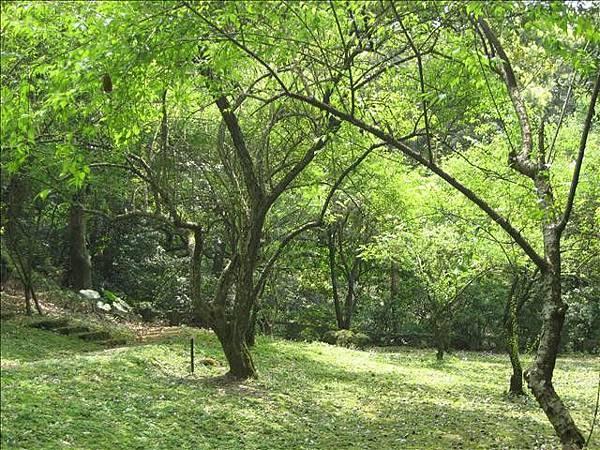 林中景.jpg