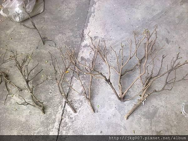 樹枝沉木2