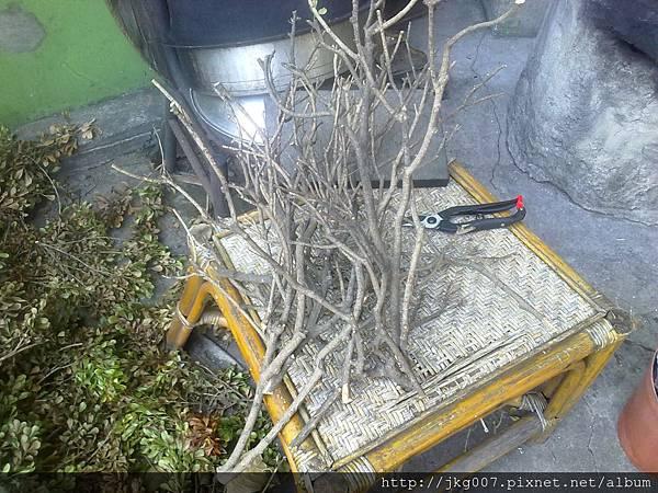 樹枝沉木3