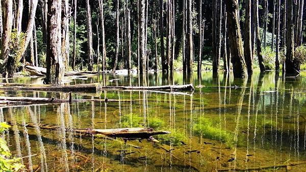 忘憂森林-1.jpg
