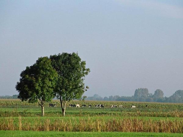 羊角村(荷蘭)027.jpg