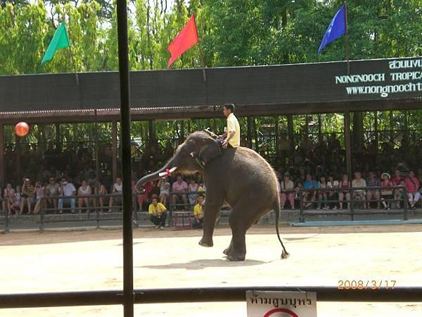 125.大象表演