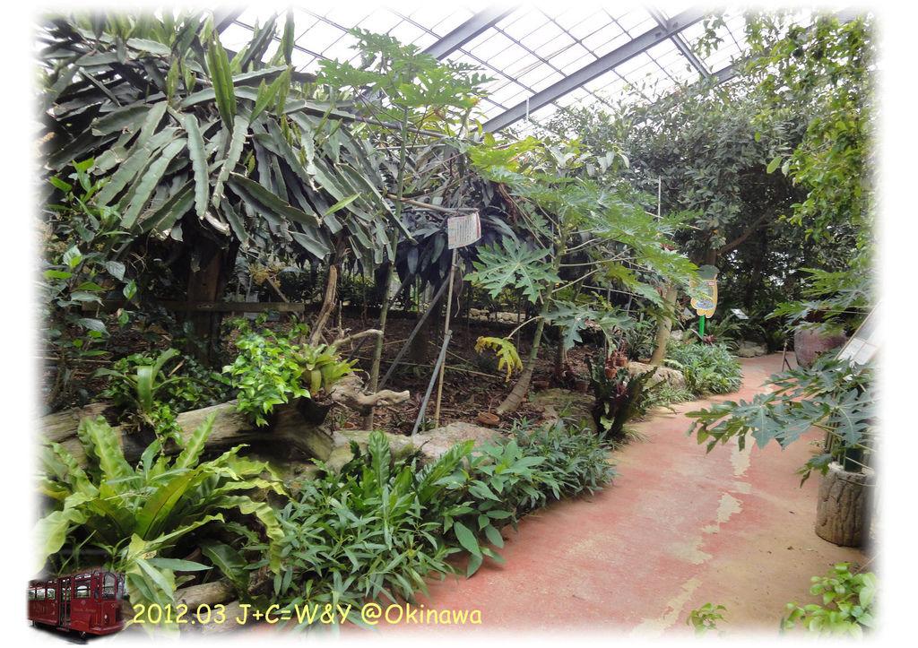3.24熱帶水果園4