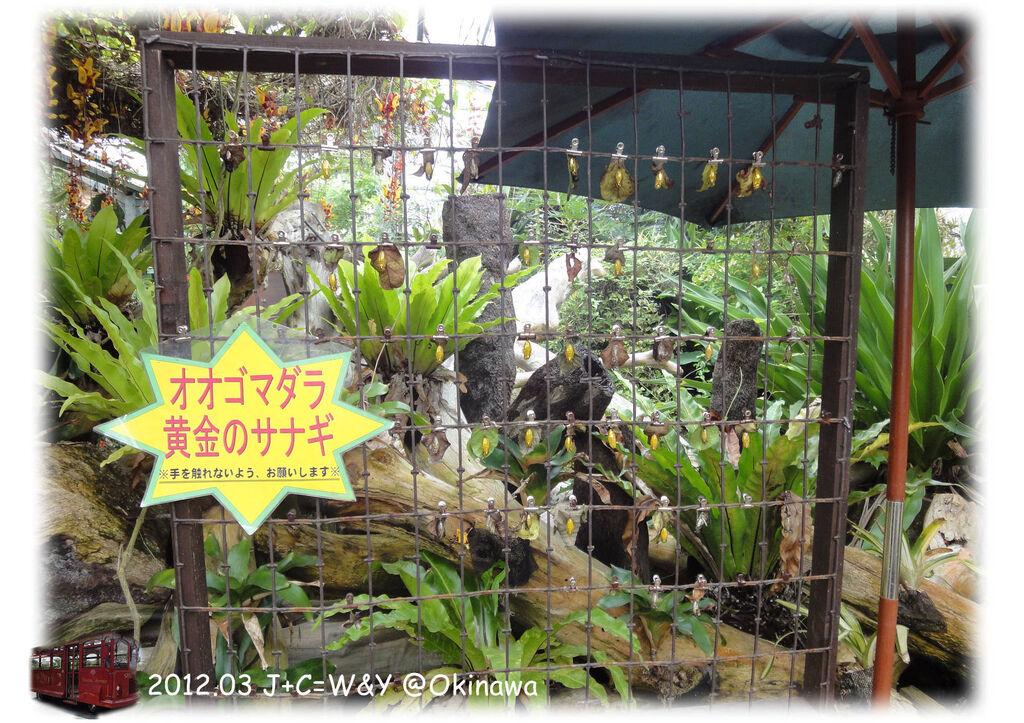 3.24熱帶水果園5