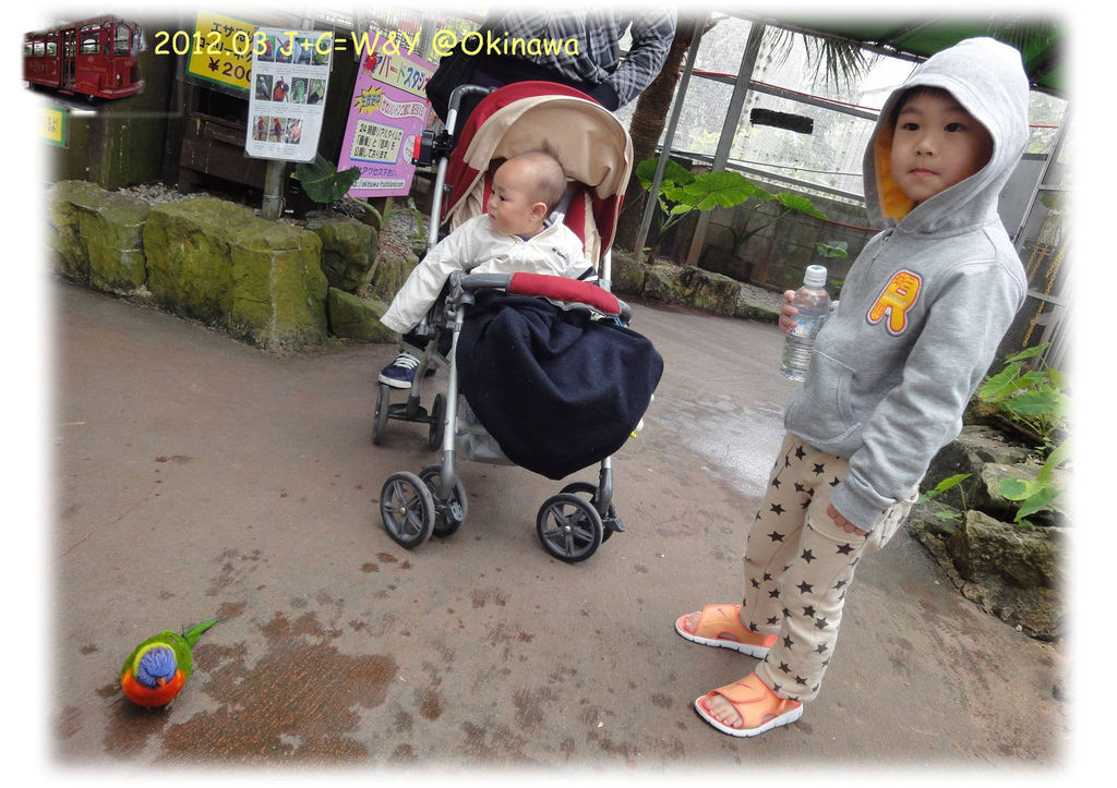 3.24熱帶水果園7