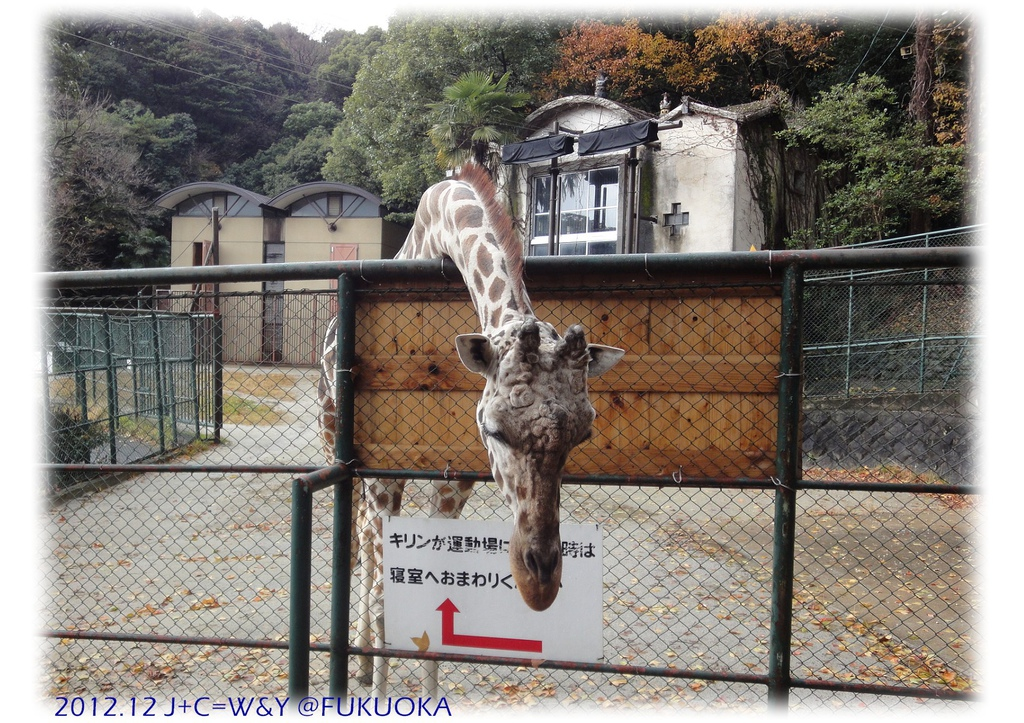12.28 動物園22