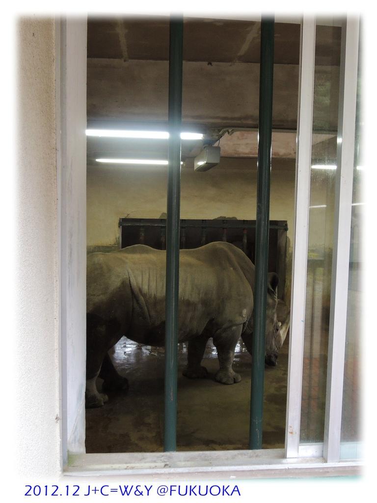 12.28 動物園31