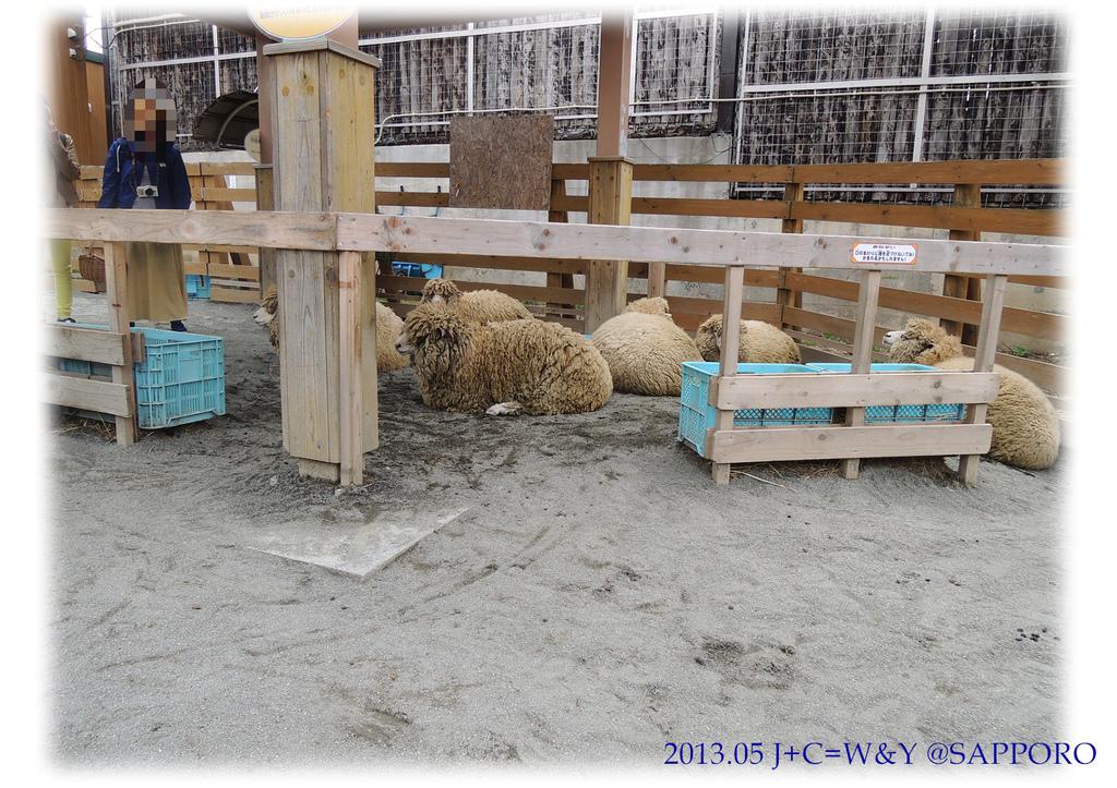05.13 円山動物園 60.jpg