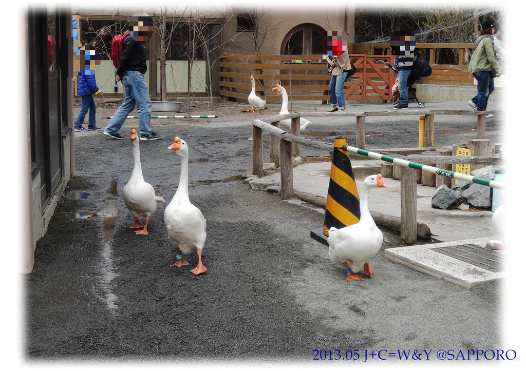 05.13 円山動物園 61.jpg