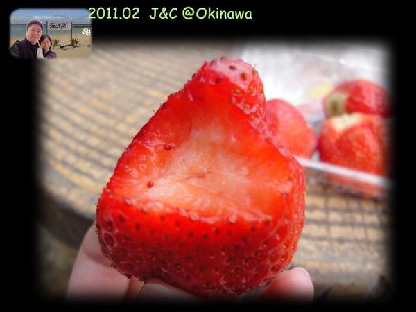 草莓近照.jpg