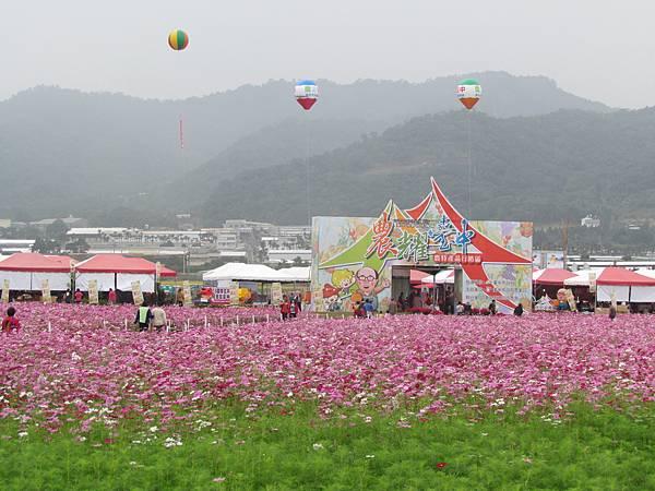 新社花海2013-7244.JPG
