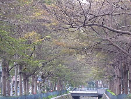 櫻花林20140208-1305.JPG