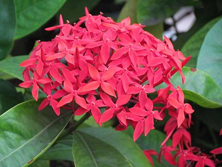 媽媽的花20140514-3532.JPG
