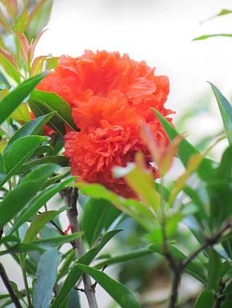 媽媽的花20140514-3541.JPG