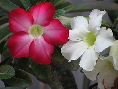 媽媽的花20140514-3638.JPG