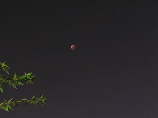 月蝕20141008-6798.JPG