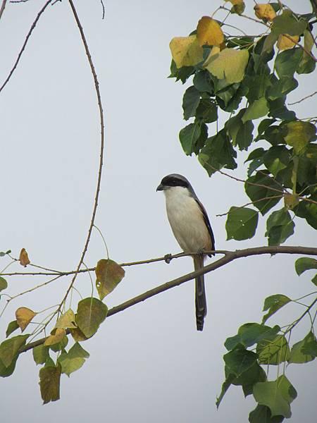 鳥20150101-0519.JPG