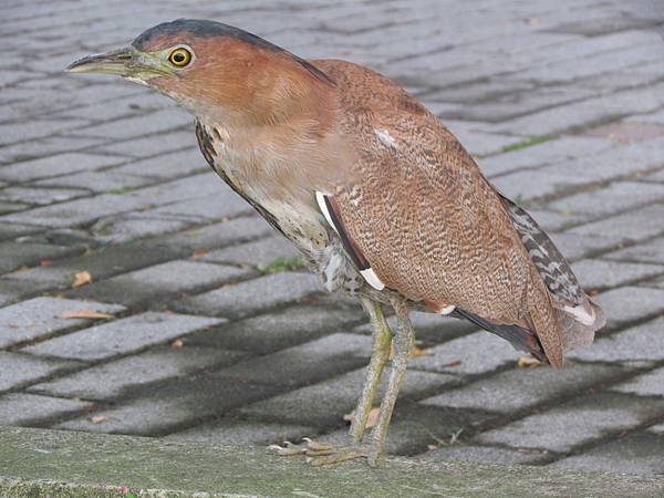 鳥201511-6728.JPG