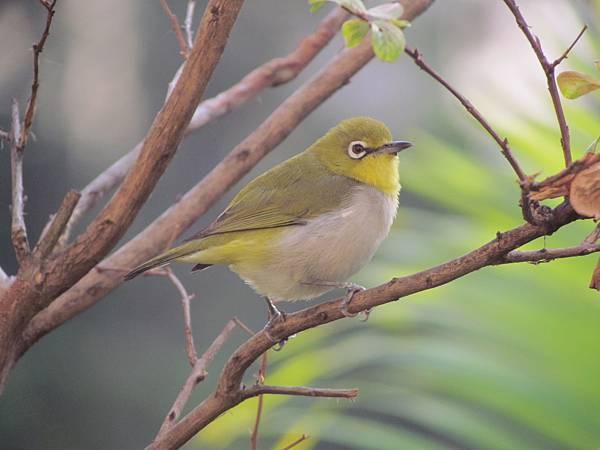 鳥20151127-7364.JPG