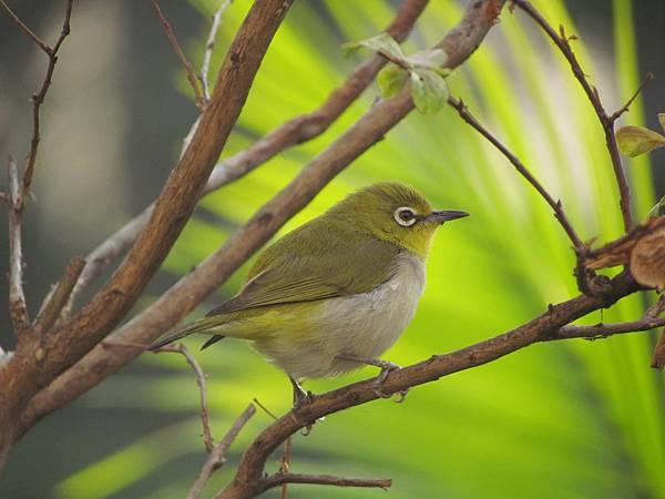 鳥20151127-7361.JPG
