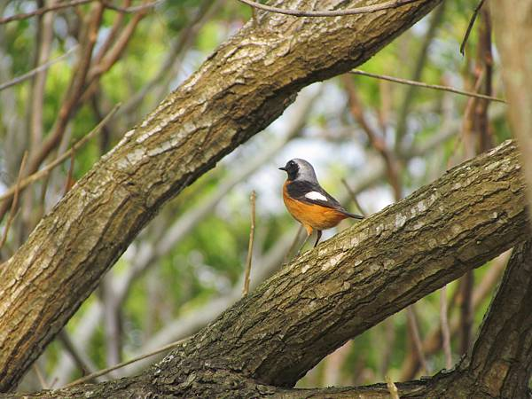 鳥20160306-8273.JPG
