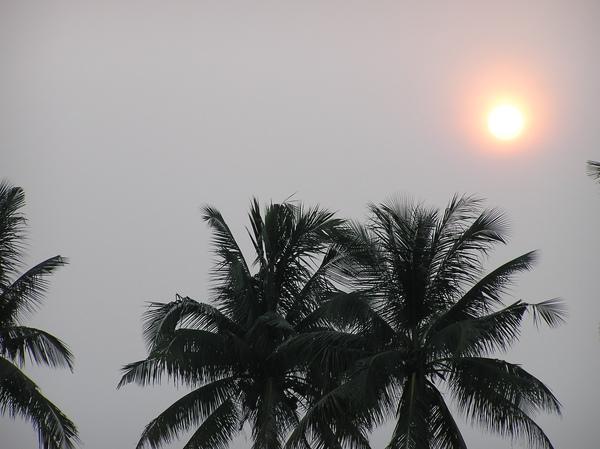 日在椰樹上.JPG
