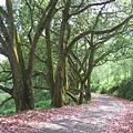 樹下紅葉.JPG