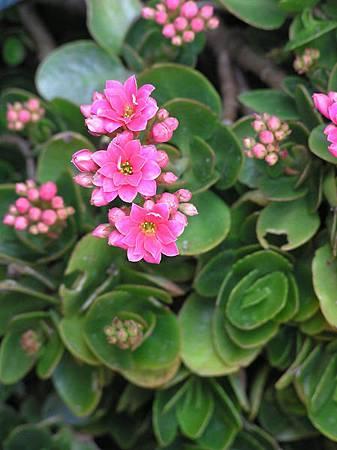 小紅花.JPG