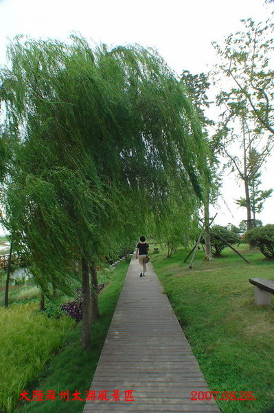 太湖公園楊柳