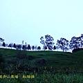 台東太麻里金針山青山農場之樹