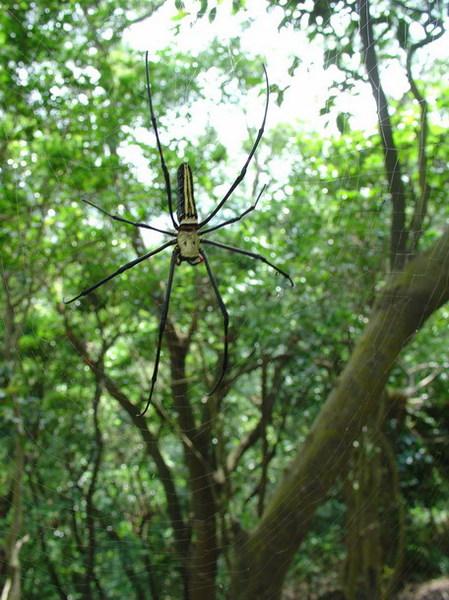 人面蜘蛛4